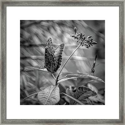 Black And White Butterflies On Leaves Framed Print