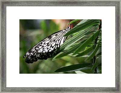 Black And White Butterfly -  Framed Print