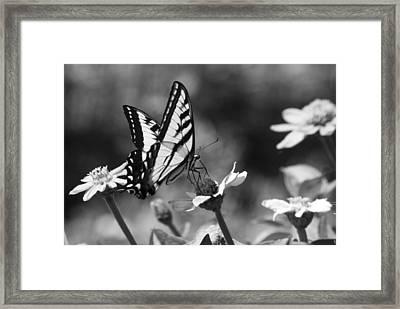 Black And White Butterfly On Flower Framed Print