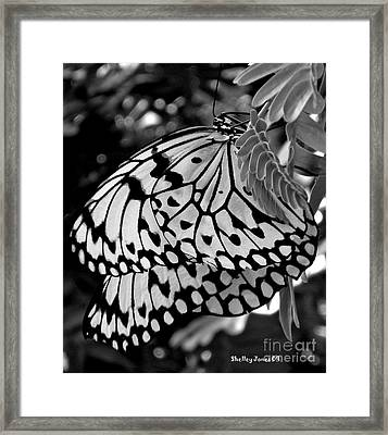Black And White Butterfly Framed Print