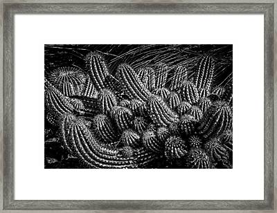 Framed Print featuring the photograph Black And White Cactus by Harry Spitz