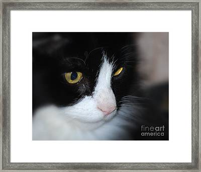 Framed Print featuring the photograph Black And White Cat by Lila Fisher-Wenzel
