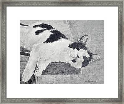 Black And White Cat Lounging Framed Print
