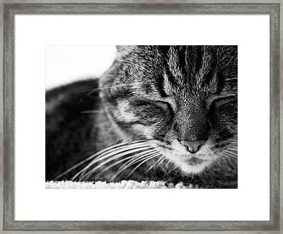 Black And White Cat Nap Framed Print by Rachel Morrison