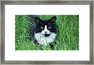 Black And White Cat With Green Eyes Framed Print