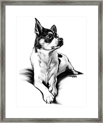 Black And White Chihuahua By Spano Framed Print by Michael Spano