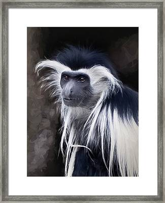 Black And White Colobus Monkey Framed Print by Penny Lisowski