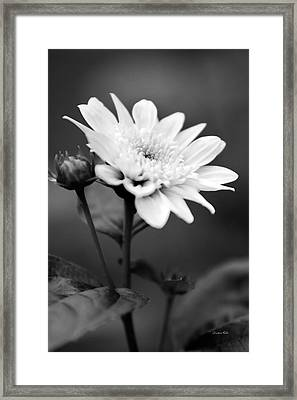Framed Print featuring the photograph Black And White Coreopsis Flower by Christina Rollo