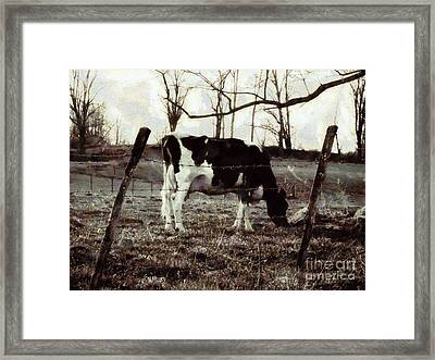 Black And White - Cow In Pasture - Vintage Framed Print by Janine Riley