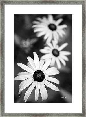 Framed Print featuring the photograph Black And White Daisies by Christina Rollo