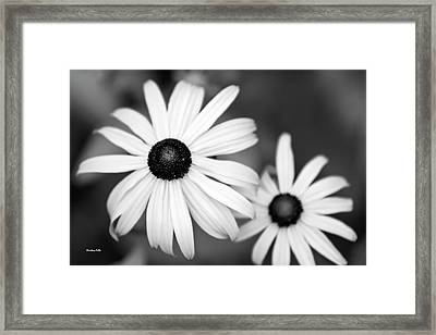 Framed Print featuring the photograph Black And White Daisy by Christina Rollo