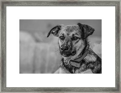 Black And White Dog Portrait Framed Print by Daniel Precht