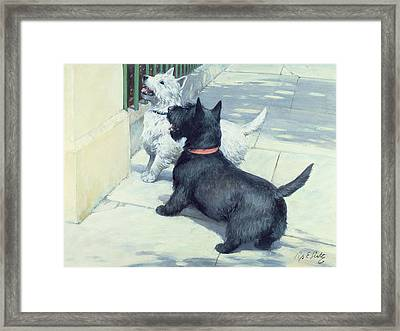 Black And White Dogs Framed Print