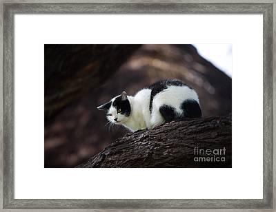 Black And White Domestic Cat Framed Print