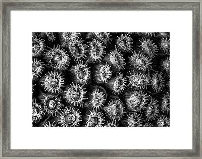 Black And White Feeding Coral Framed Print by Jean Noren