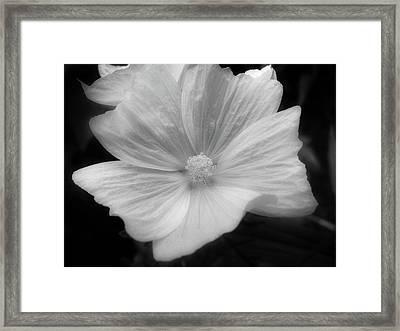 Black And White Floral Framed Print by Rhonda Barrett