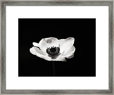Black And White Flower Art - Anemone Framed Print