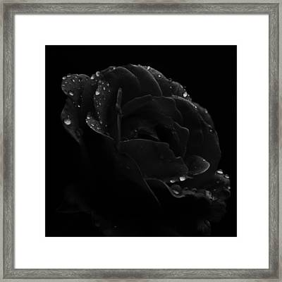 Framed Print featuring the photograph Black And White Flower Fifteen by Kevin Blackburn