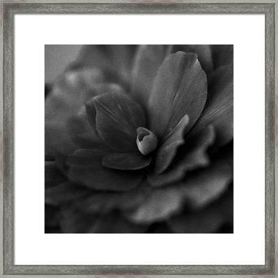 Framed Print featuring the photograph Black And White Flower Fifty by Kevin Blackburn
