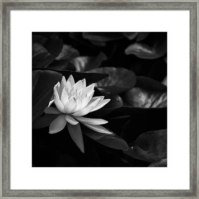 Framed Print featuring the photograph Black And White Flower Nine by Kevin Blackburn