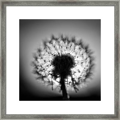 Framed Print featuring the photograph Black And White Flower Ten by Kevin Blackburn