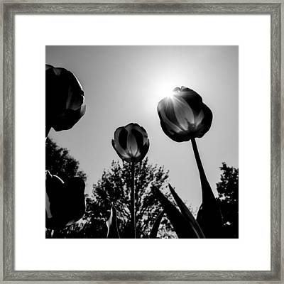 Black And White Flower Thirty One Framed Print