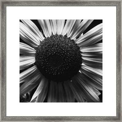 Framed Print featuring the photograph Black And White Flower Twelve by Kevin Blackburn