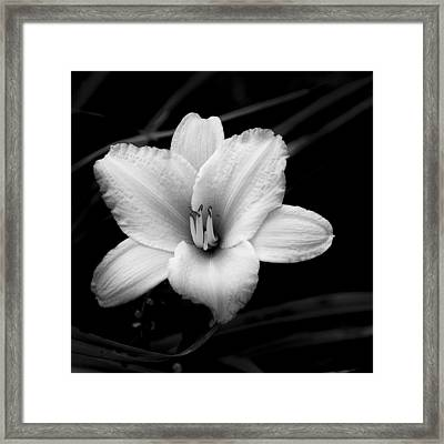 Framed Print featuring the photograph Black And White Flower Twenty by Kevin Blackburn