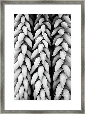 Black And White Hanging Plant Detail. Framed Print by Cesar Padilla