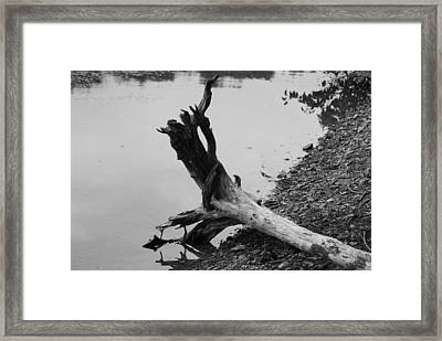 Black And White Framed Print by Heather Green