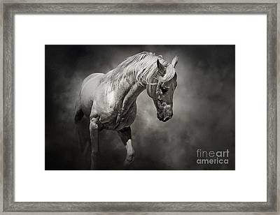 Black And White Horse - Equestrian Art Poster Framed Print