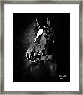 Black And White Horse Face Framed Print by Gull G