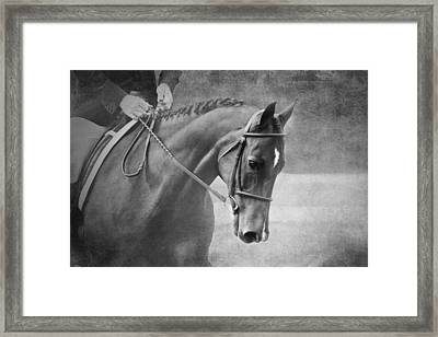 Black And White Horse Photography - Softly Framed Print by Michelle Wrighton