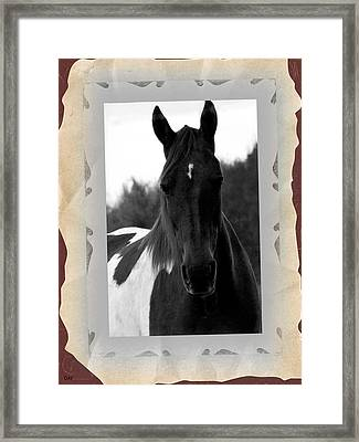 Black And White Horse Portrait Framed Print by Debra     Vatalaro