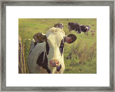 Black And White Pasture Framed Print by JAMART Photography