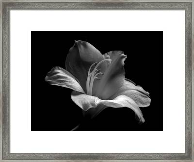 Black And White Lily Framed Print by Artecco Fine Art Photography