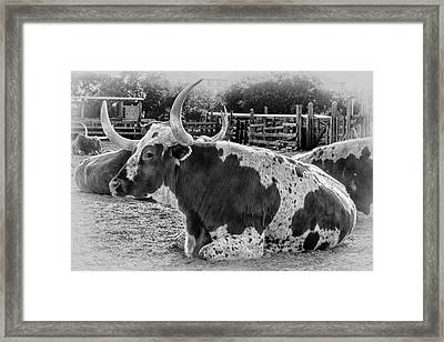Black And White Longhorn Framed Print by Kelley King