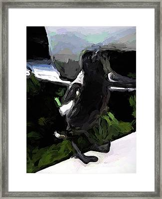 Black And White Magpie On The Porch Framed Print
