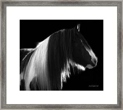 Black And White Mare Framed Print by Terry Kirkland Cook