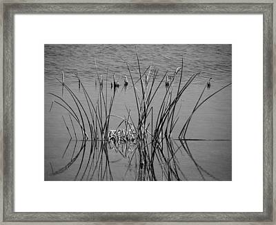 Black And White Marsh Design Framed Print by Rosalie Scanlon