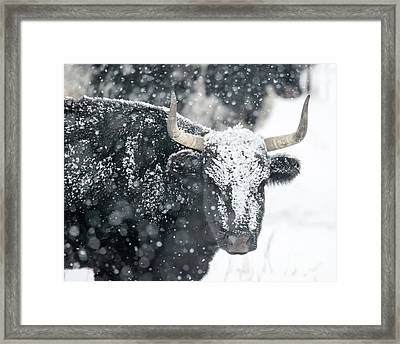 Black And White Framed Print by Mike Dawson