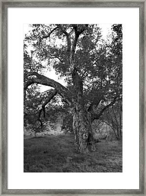 Black And White Oak Framed Print by Bransen Devey