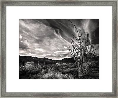 Black And White Ocotillo And Clouds Framed Print