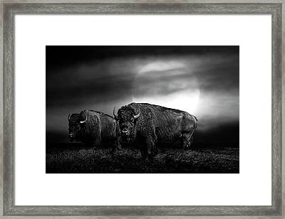 Black And White Of An American Buffalo Under A Super Moon Framed Print by Randall Nyhof