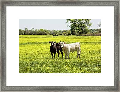 Black And White On Yellow Framed Print