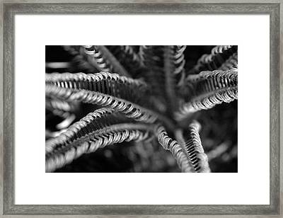 Black And White Palm Abstract 3624 Bw_2 Framed Print