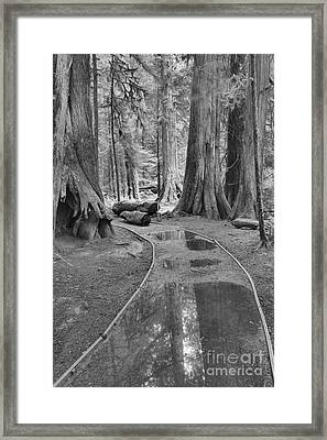 Black And White Path Through The Forest Framed Print by Adam Jewell