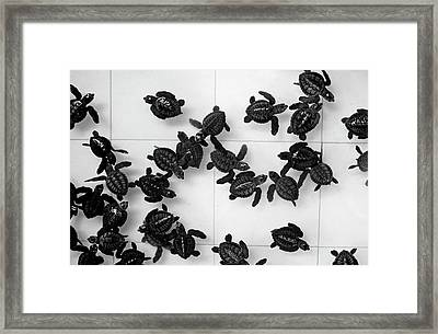 Black And White Pattern Made Out Of Many Tiny Baby Sea Turtles Swimming In The Pool Framed Print