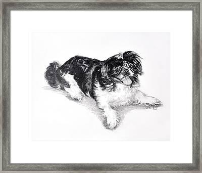 Black And White Pekingese Framed Print
