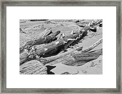 Black And White Photo Of Driftwood And Sand On Popham Beach On The Coast Of  Framed Print by Keith Webber Jr